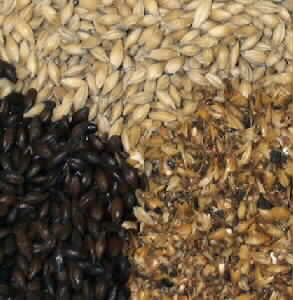 Malted and Unmalted Grains
